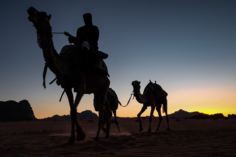 Bedouin riding a camel at sunset in the desert