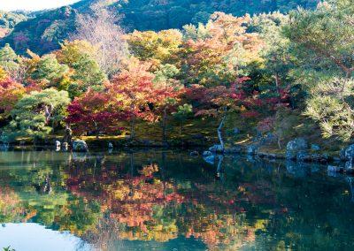 JAPON - LIFESTYLE - KOYO -THE JAPANESE LEAF PEEPING LA CHASSE JAPONAISE AUX FEUILLES ROUGE D'AUTOMNE
